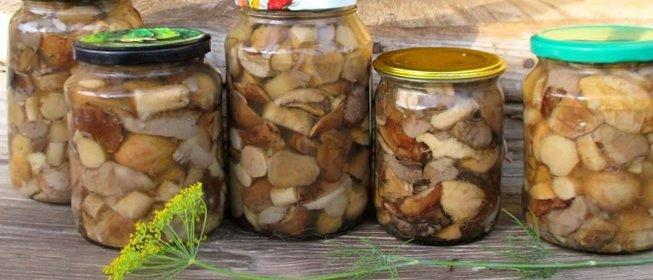 Как замариновать грибы на зиму рецепты с фото пошагово без стерилизации